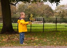 Pojken, i att gå till och med gräs i, parkerar i höst royaltyfria foton