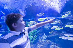 Pojken i Oceanarium betraktar fisken Arkivbild