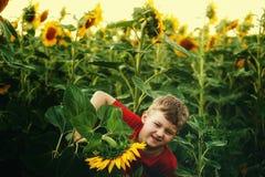 Pojken i solrosor Royaltyfria Bilder