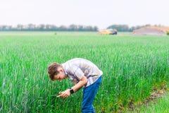 Pojken lutar över att rymma grönt vete med hans händer, den framtida agronomen studerar jordbruk för att göra affär in royaltyfri fotografi