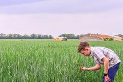 Pojken lutar över att rymma grönt vete med hans händer, den framtida agronomen studerar jordbruk för att göra affär in arkivfoton