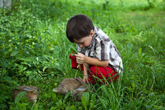 Pojken matade kaniner i trädgården vid handen Arkivbilder