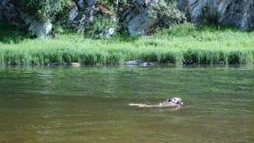 Pojken meddelar på en smartphone, medan simma i vattnet Moderna vattentäta mobila grejer Tonåringen simmar lager videofilmer