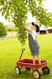 Pojken når mullbärsträd i vagn Royaltyfri Foto