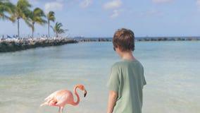 Pojken och flamingo på stranden av Aruba Flamingostrand lager videofilmer