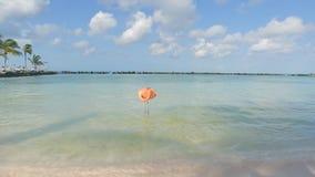 Pojken och flamingo på stranden av Aruba Flamingostrand arkivfilmer