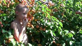 Pojken samlar aprikors arkivfilmer
