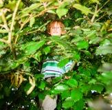 Pojken som bär exponeringsglas, sitter på ett träd och ler Royaltyfria Bilder