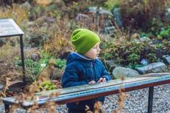 Pojken studerar ett tecken i botaniska trädgården Arkivbild