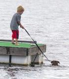 Pojken vägleder simninghunden Royaltyfri Foto