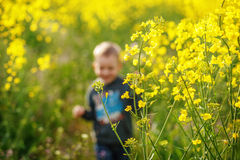 Pojkespring i ett fält av blommande gul rapsfrö Royaltyfri Bild