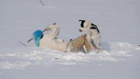 Pojketon?ringgyckel som spelar med en hund i vintern i sn?n stock video