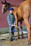 Pojkewash hans häst Royaltyfri Foto