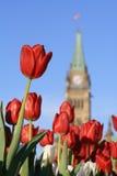 pokój czerwony tulipan wieży Obrazy Royalty Free