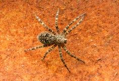 Pokładu pająk Zdjęcia Royalty Free