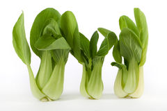 Pok Choi. Asian fresh vegetable against white background Royalty Free Stock Images