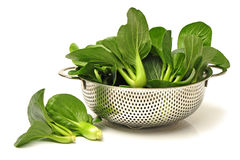 Pok Choi Royalty Free Stock Image