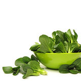 Pok Choi Stock Photo