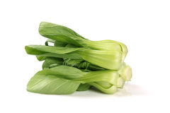 Pok Choi Stock Photography