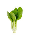 Pok Choi on white background Stock Photography