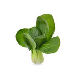 Pok Choi on white background Royalty Free Stock Image