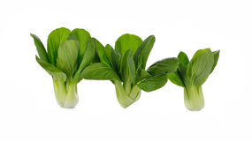 Pok Choi on white background Royalty Free Stock Photo
