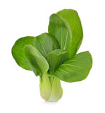 Pok Choi on white background Royalty Free Stock Images