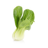 Pok Choi on white background.  Stock Photography