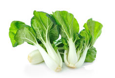 Pok Choi  on white background Stock Photos