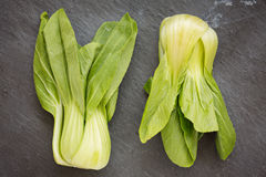 Pok Choi on white background Royalty Free Stock Photography
