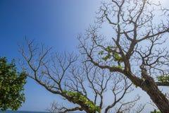 Pok Tunggal海滩地标,日惹,印度尼西亚 免版税图库摄影