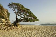 Pok Tunggal Beach Yogyakarta imagenes de archivo