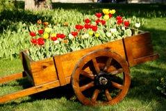 pokaż tulipanu Zdjęcie Stock