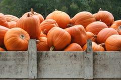 Pokaz jaskrawe pomarańczowe banie w ciężarówce Fotografia Royalty Free