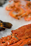 pokazu rybi homara rynek Zdjęcie Stock