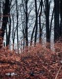 Pokazywać jesień las od ziemi fotografia royalty free