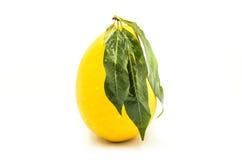 pokazywać pokrojonej kobiety owoc rżnięty owocowy mango Fotografia Royalty Free