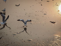 Pokazywać daleko moment ptak w kierunku odbicia Fotografia Stock