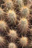 Pokes кактуса Аризоны стоковое фото