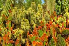 Pokey Plants Stock Photography