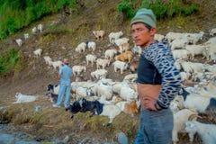 POKHARA, NEPAL, IL 4 SETTEMBRE 2017: Conduca prendono la cura delle moltitudini di capre, andanti lungo la via della cittadina de Immagini Stock Libere da Diritti