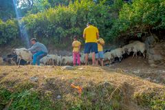 POKHARA, NEPAL, IL 4 SETTEMBRE 2017: I pastori prendono la cura delle moltitudini di capre, andanti lungo la via della cittadina  Fotografie Stock Libere da Diritti