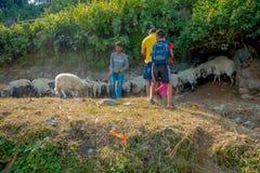 POKHARA, NEPAL, 04 SEPTEMBER, 2017: De herders behandelen troepen van geiten, die langs de straat van kleine stad binnen gaan royalty-vrije stock afbeeldingen
