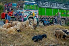 POKHARA, NEPAL, WRZESIEŃ 04, 2017: Kierdel kózki, iść wzdłuż ulicy z niektóre ciężarówkami parkować w ulicie, Zdjęcia Royalty Free
