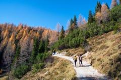 Pokljuka Slovenia, Oktober, - 31, 2015: Wycieczkowicze na ścieżce Ble Zdjęcie Royalty Free