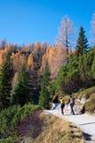 Pokljuka Slovenia, Oktober, - 31, 2015: Wycieczkowicze na ścieżce Ble Zdjęcia Royalty Free