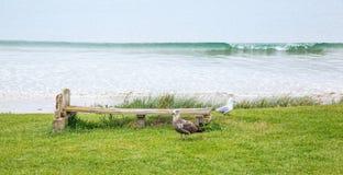 Pokojowa scena drewniana ławka dla kłamać twój plecy na trawa ogródzie stawia czoło piaskowatą plażę z gołębia i seagull ptakiem  Fotografia Royalty Free