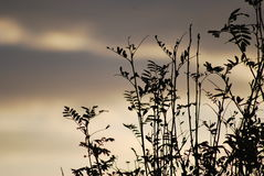 Pokojowa scena roślina w fadingu świetle dziennym Zdjęcie Stock