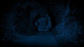 Pokojowa Wiejska droga Przy nocą zbiory wideo