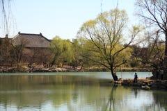 pokojowa wiosna Zdjęcie Stock
